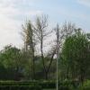 Небеса, разлапистое дерево... А листья кто поснимал? На кусты сползли!